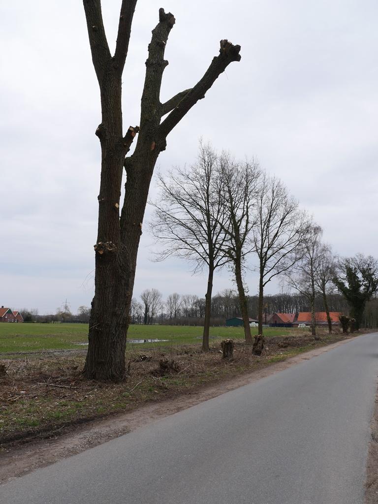 Super Baum- und Gehölzpflege - Rathaus - Stadt Ahaus #XH_56